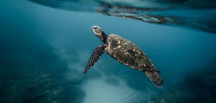 Jaké chyby děláme při chovu vodních želv