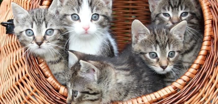 Připravujeme kočku na porod