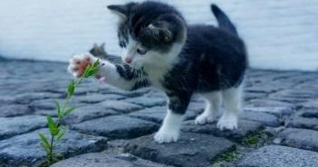 Staráme se o kočku od koťátka po dospělou