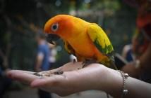 chováme papoušky, tipy a rady pro chovatele