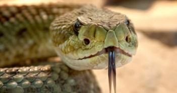 důvody, proč si pořídit hada