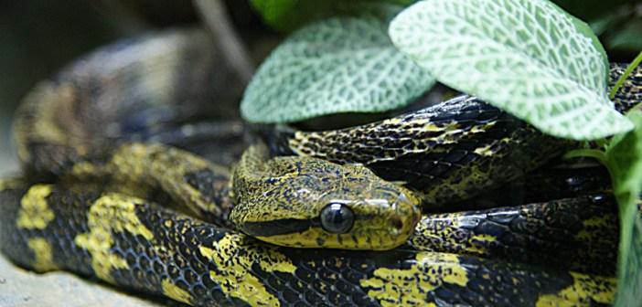 kde jsou hadi nejrozšířenější