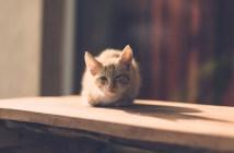 když kočka zvrací