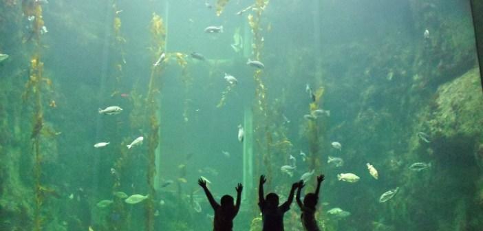 Jste majiteli přírodního akvária? Poradíme, jak na jeho údržbu