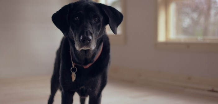 jak vyvolat psí zvracení