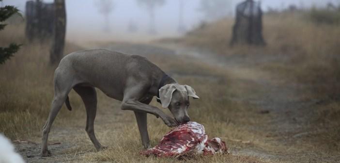 pozor na psí krmení