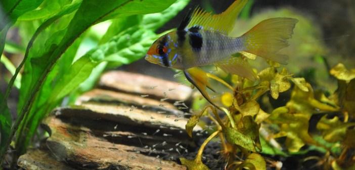 proč se musí pravidelně vyměňovat voda v akváriu