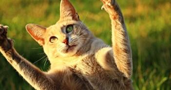 I kočičí drápky se musí stříhat. Prozradíme, jak na to