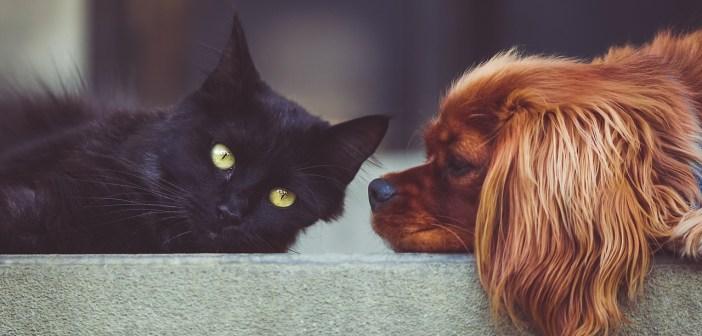 I kočky a psi mohou mít vysoký tlak. Jak ho poznat?