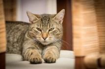 Kočka přináší neštěstí. Jaké další pověry a pověsti se kolem kočky točí?