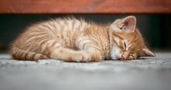 Omyly, kterými ubližujeme své kočce