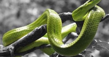 I hady může trápit nemoc. Jaké jsou nejčastější?