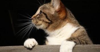 I kočky mohou trápit černé tečky. Jsou pro ně však nebezpečné