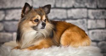 Trápí vás nadměrné psí línání? Víme, jak běžné línání minimalizovat