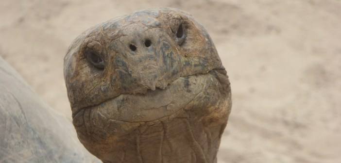 Jaké nemoci sužují želvy? A jaké jsou příznaky a příčiny?