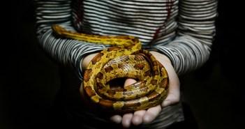 Paraziti jako největší nepřátelé hadů. Jací se objevují nejčastěji?