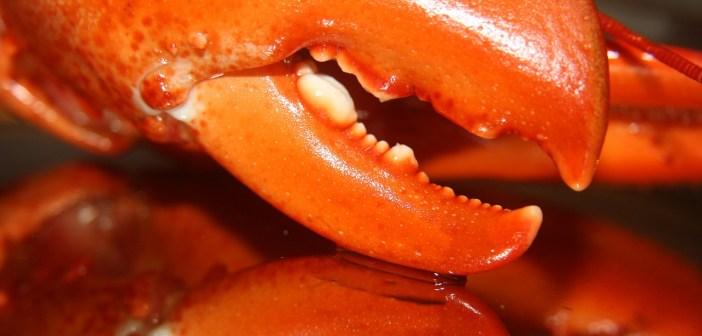 Krab upíří je výjimečnost sama. Jak se o něj starat?