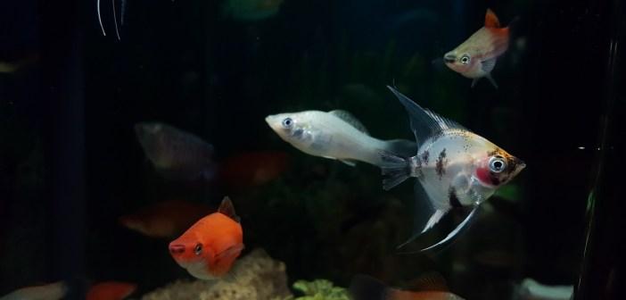 Pozor na akvarijní nemoci. Jednou z nich je i gigantický růst buněk