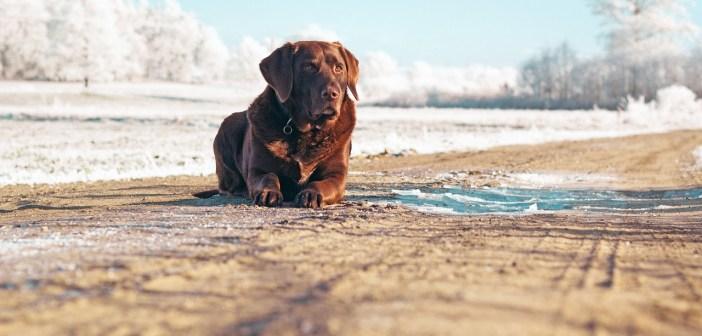 Jak v zimě pečovat o srst psa