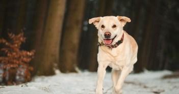 Zima a pes. Jak mu pomoct si zvyknout na zimu