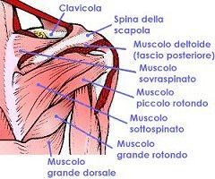 Rottura della cuffia dei rotatori  dolore alla spalla 05b77f1a51a6