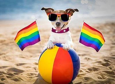 Gays e animais: desinformação e Neolíngua.