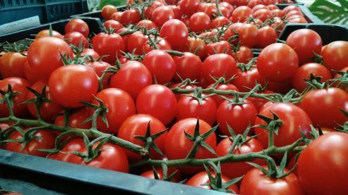 Tomate IMG-20151210-WA0027