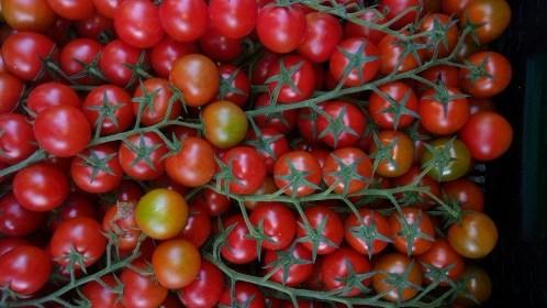 Tomates_racimo.JPG
