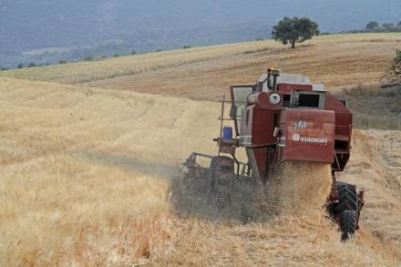 cosechadora cereal1