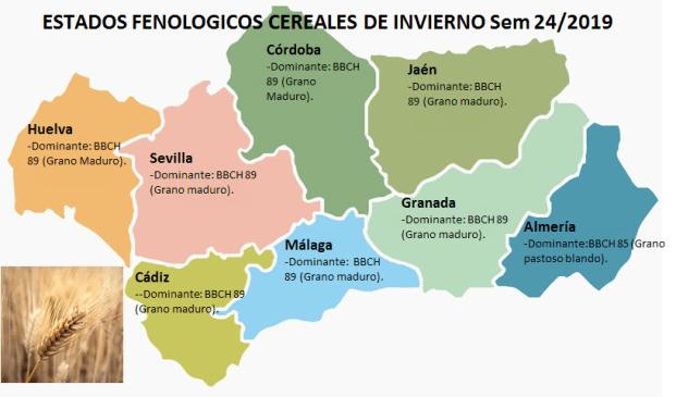 Estado fenológico cereales S24.png