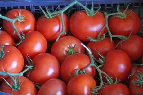 Tomate_IMG_4164