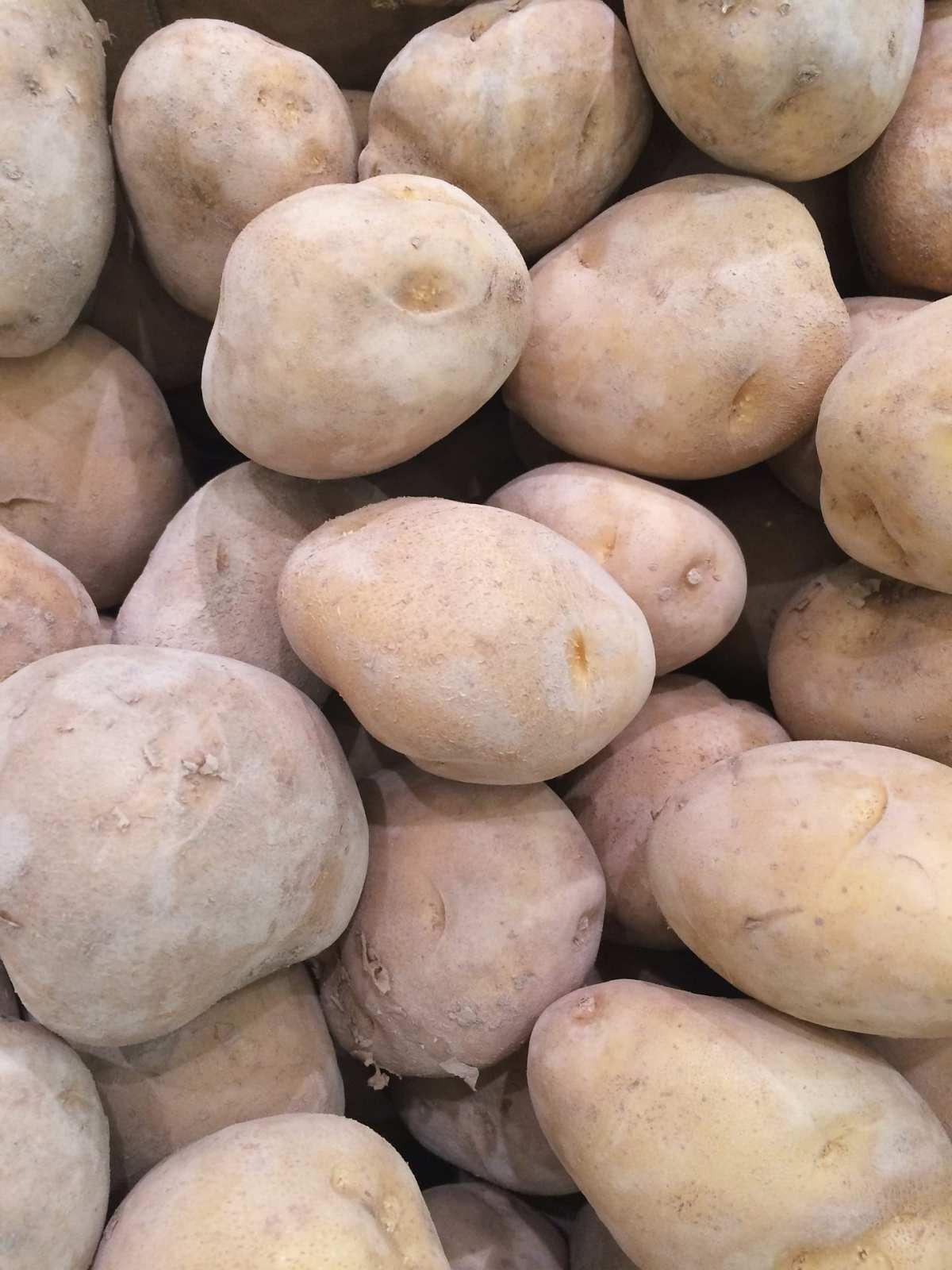 campaña de patatas