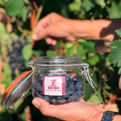 vendimia de La Rioja uvas bote
