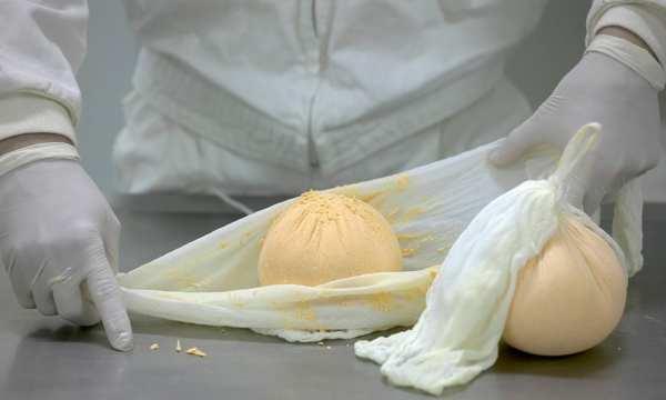 elaboración queso
