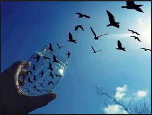libertà