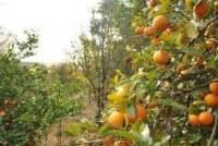 principios-da-permacultura