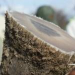 China lifts ban onrhino horn trading