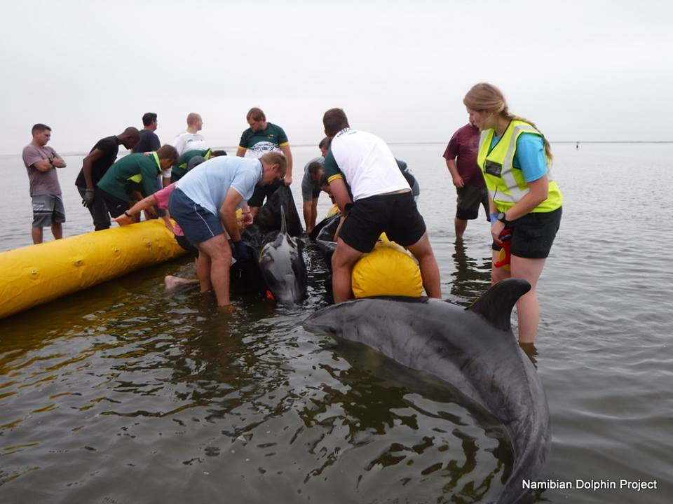 Dolphin rescue was an extraordinary experience
