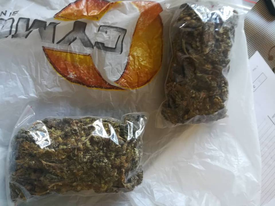 More cannabis cultivators caught at the coast