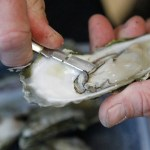 Oysters declared safe to consume again