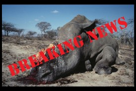 Poachers kill two rhinos in Etosha