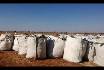 Alternative fodder harvested to save livestock