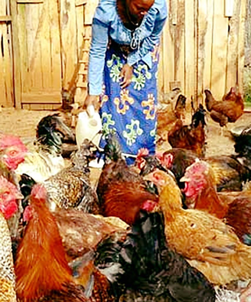 Nelao Poultry project Endola