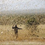 EIF assists with the battle against locusts