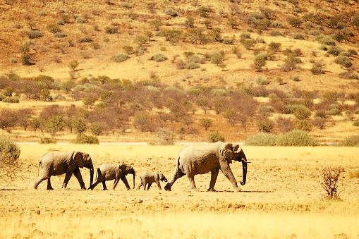 Namibia elephants sale Government sell 170 auction Ministry Environment Forestry Tourism