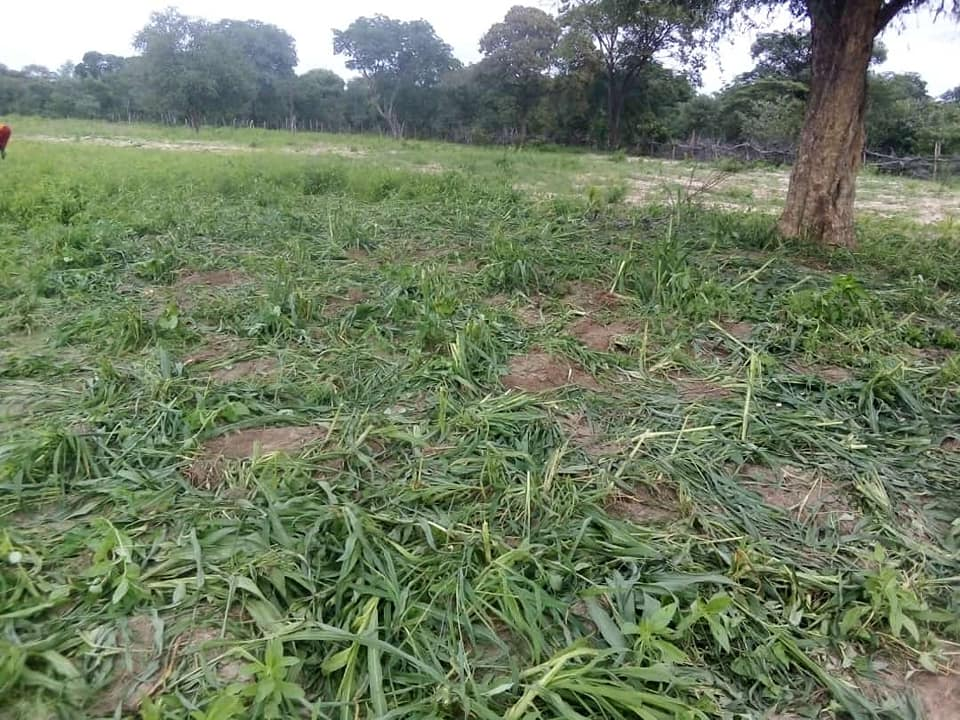 Elephants scares villagers Omundaungilo Ohangwena Region Saturday Angola