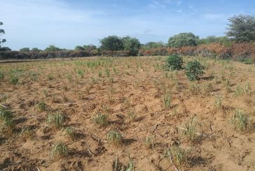 Crops drying up