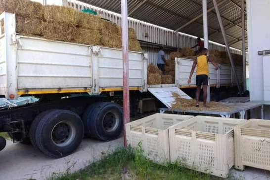Drought donations urgently needed in Kunene