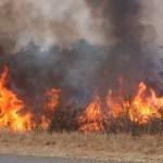 Charcoal Association warns against bush fires