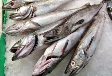 Close to 200mil raised in April Hake Auction